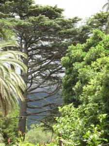 Sambreeldennebome