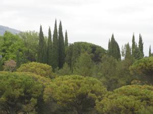 Spresbome en Sambreeldenne, Grasse, suide van Frankryk